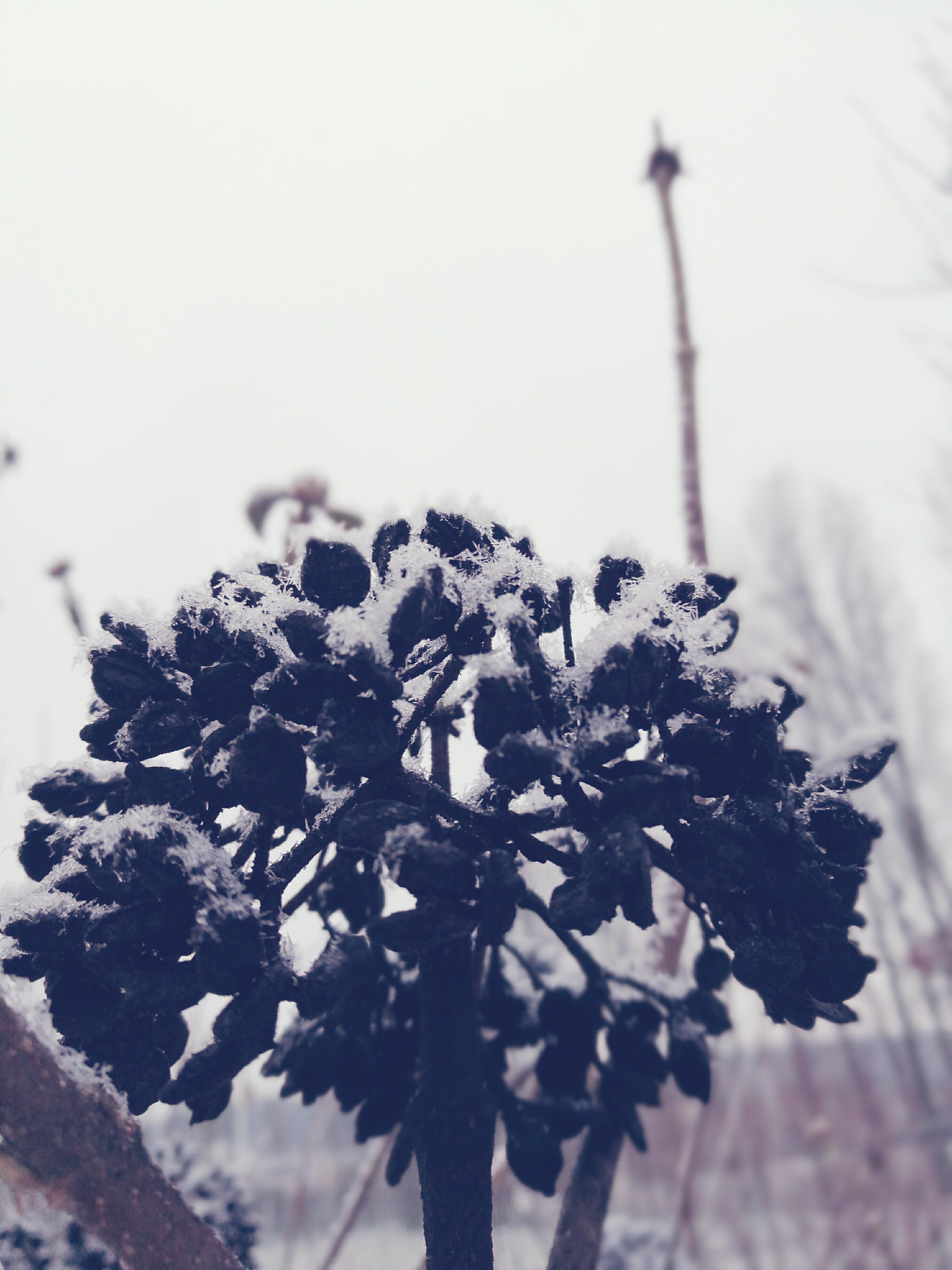 Winter Blumen Lieblingsmanufaktur